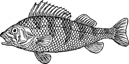 Scaly fish clip art