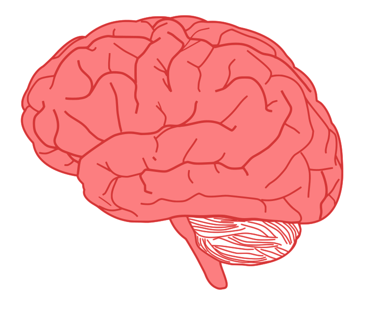 Brain clip art  2