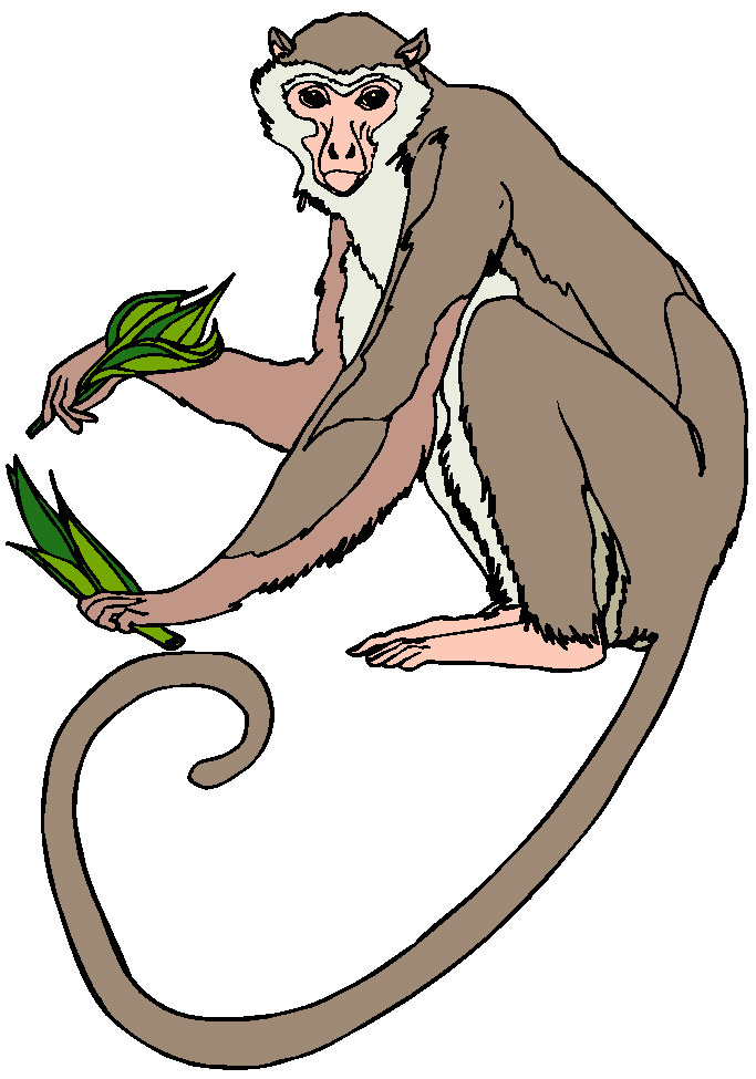 Free sock monkey clip art clipart