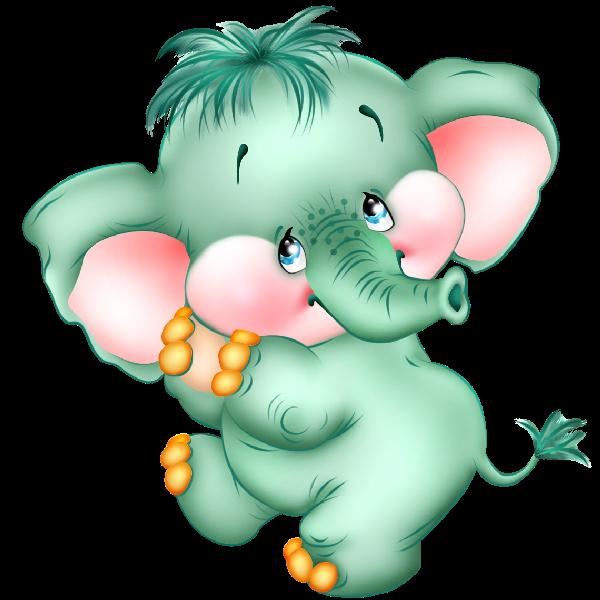 Funny baby elephant elephant images