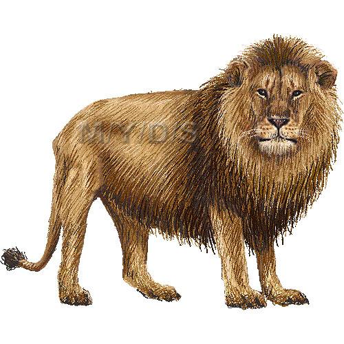 Lion clipart graphics free clip art