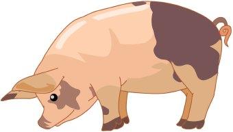 Pig clip art 2