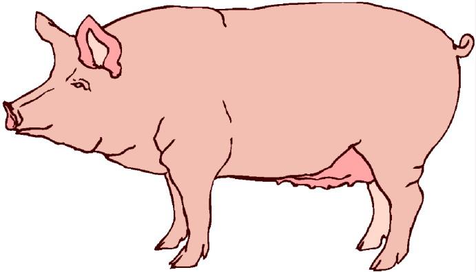 Pigs clip art 2