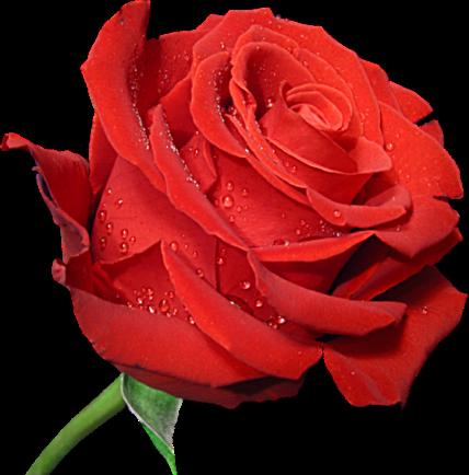 Rose clip art free