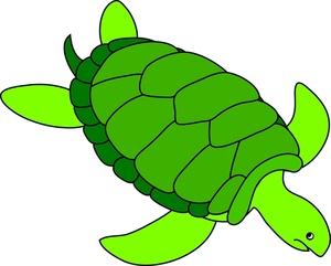 Turtle clip art images clipart
