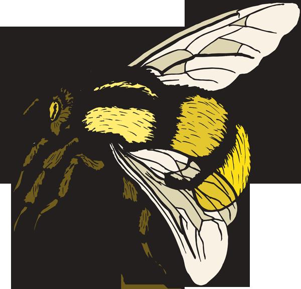 Bumble bee clip art clipart