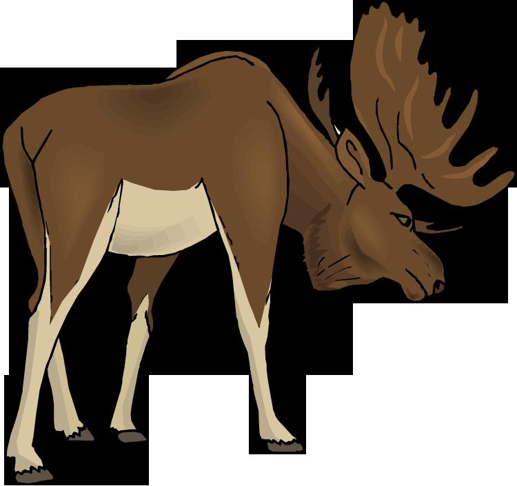 Free clip art moose clipart