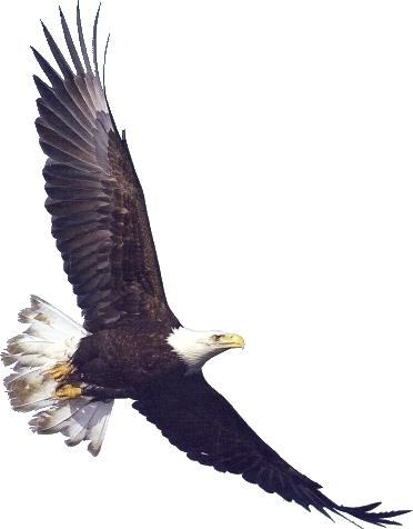 American flag eagle clip art clipart clipart