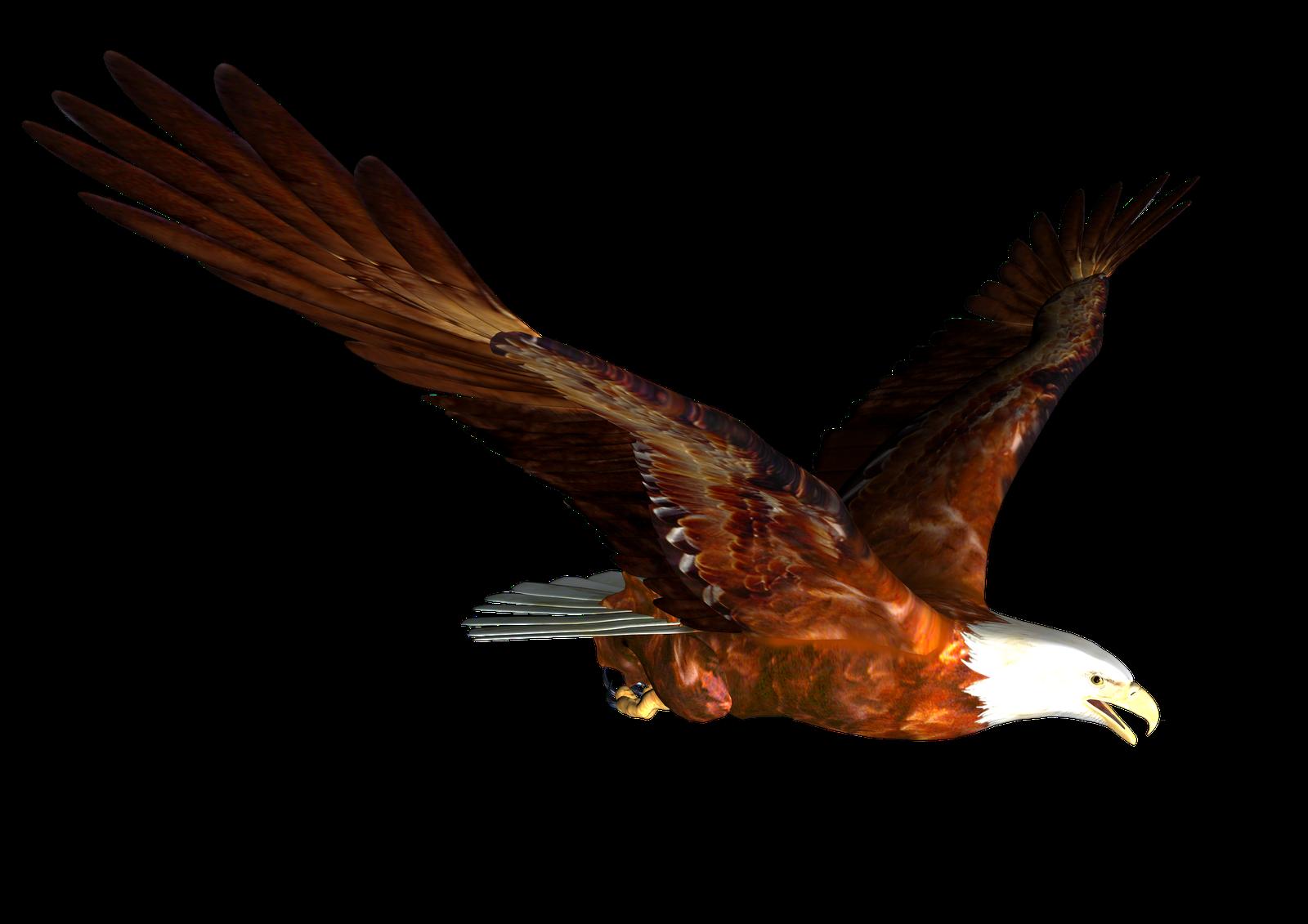 Clipart eagle clipart