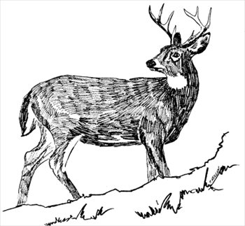 Free deers clipart free clipart graphics images and photos 2