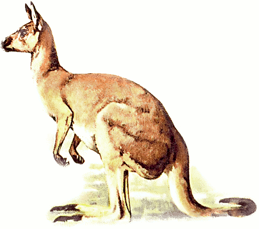 Free kangaroo clipart 1 page of public domain clip art