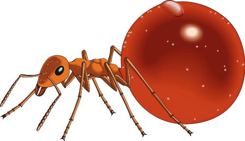Honeypot ant clip art download