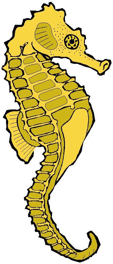 Seahorse google image result for clipartblog com clipart pics