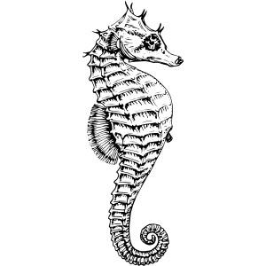 Seahorse vector clipart