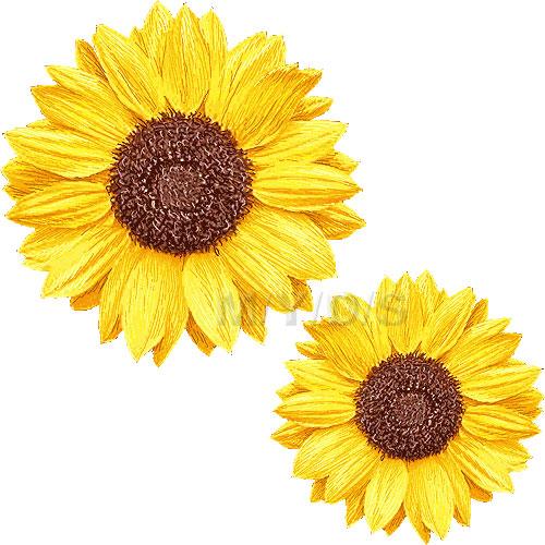 Sunflower clipart free clip art