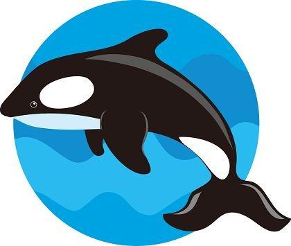 Sperm whale clip art vector sperm whale graphics