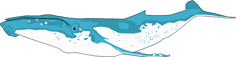 Whale clip art download