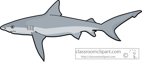 Shark clipart sharks tiger shark classroom clipart