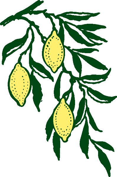 Lemon branch clip art at vector clip art online