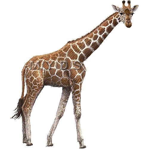 Giraffe clipart graphics free clip art