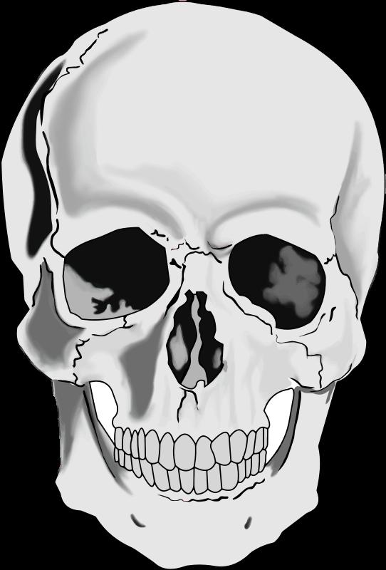 Clipart realistic human skull