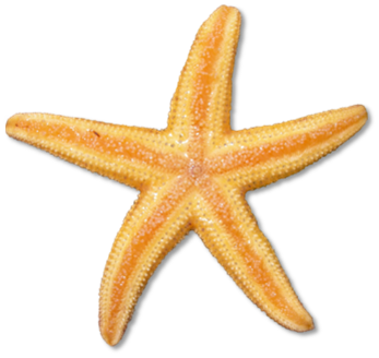 starfish clip art images  illustrations  photos Starfish Coloring Pages Starfish Drawing