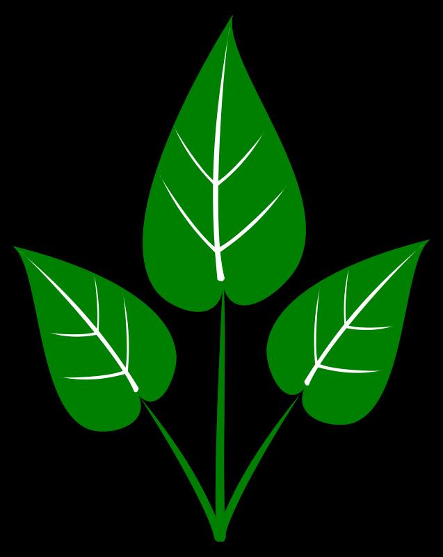 Leaf clip art fall leaves