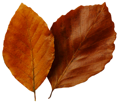 Leaf fall leaves clip art beautiful autumn clipart  2