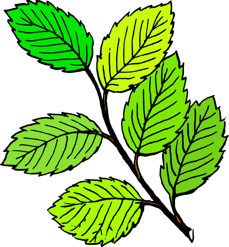 Spring leaf clipart clipart