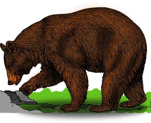 Bear clip art  2