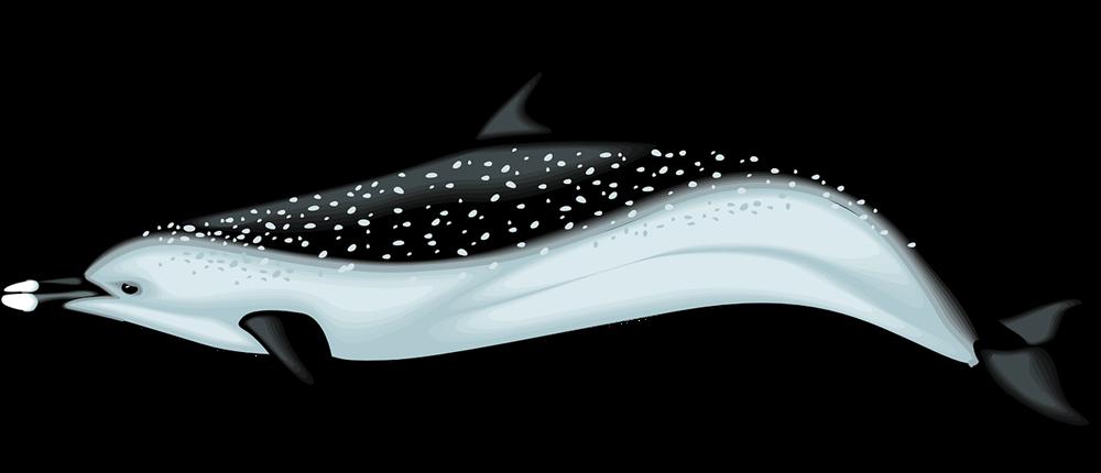 Dolphin sea creatures clip art