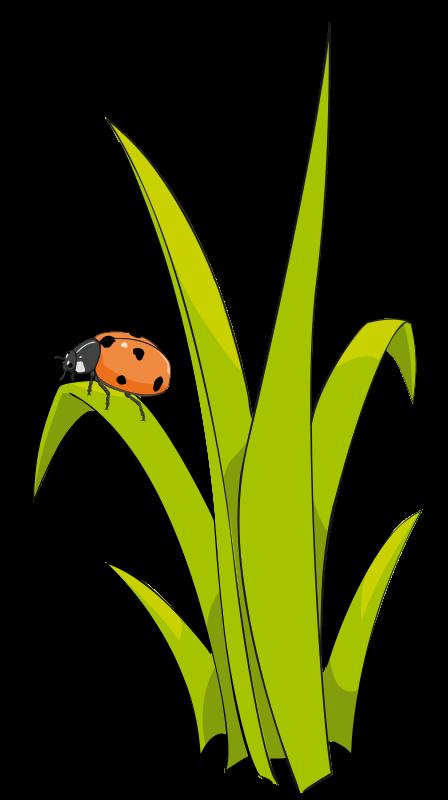 Grass clip art  2