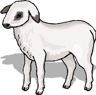 Sheep clip art 4