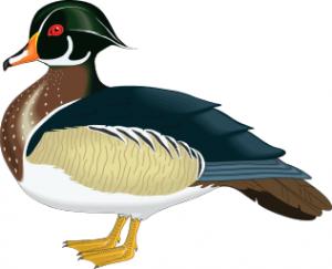 Duck 2 clip art download