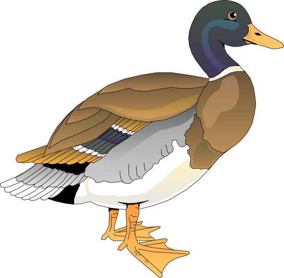 Duck Clip Art  Images Illustrations Photos