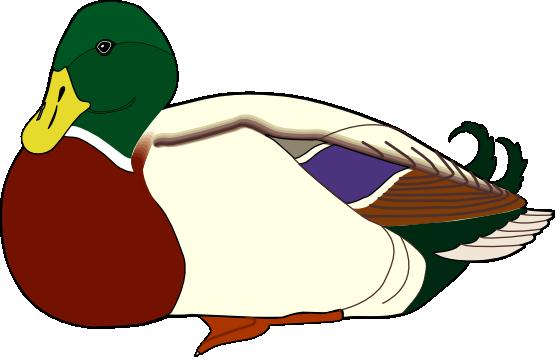 Duck clip art  4