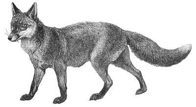 Free fox clipart 2