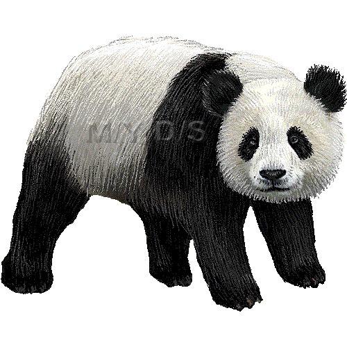 Panda clipart wallpaper images