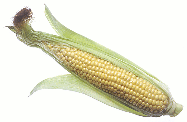 Free sweet corn clipart clip art image 9 of