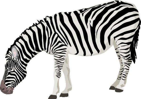Zebra clip art  2