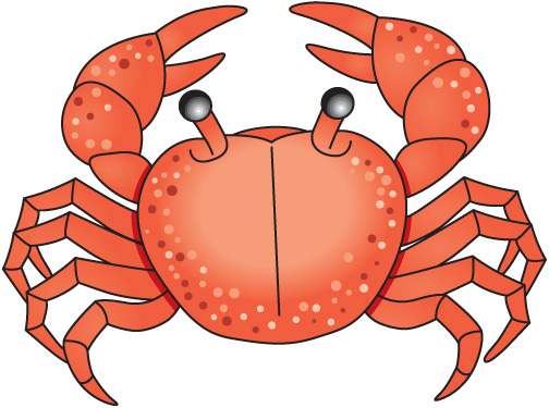 Crab clipart clipart cliparts for you
