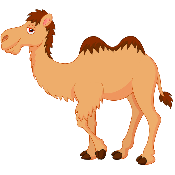 Cute camel clipart funny camel pictures