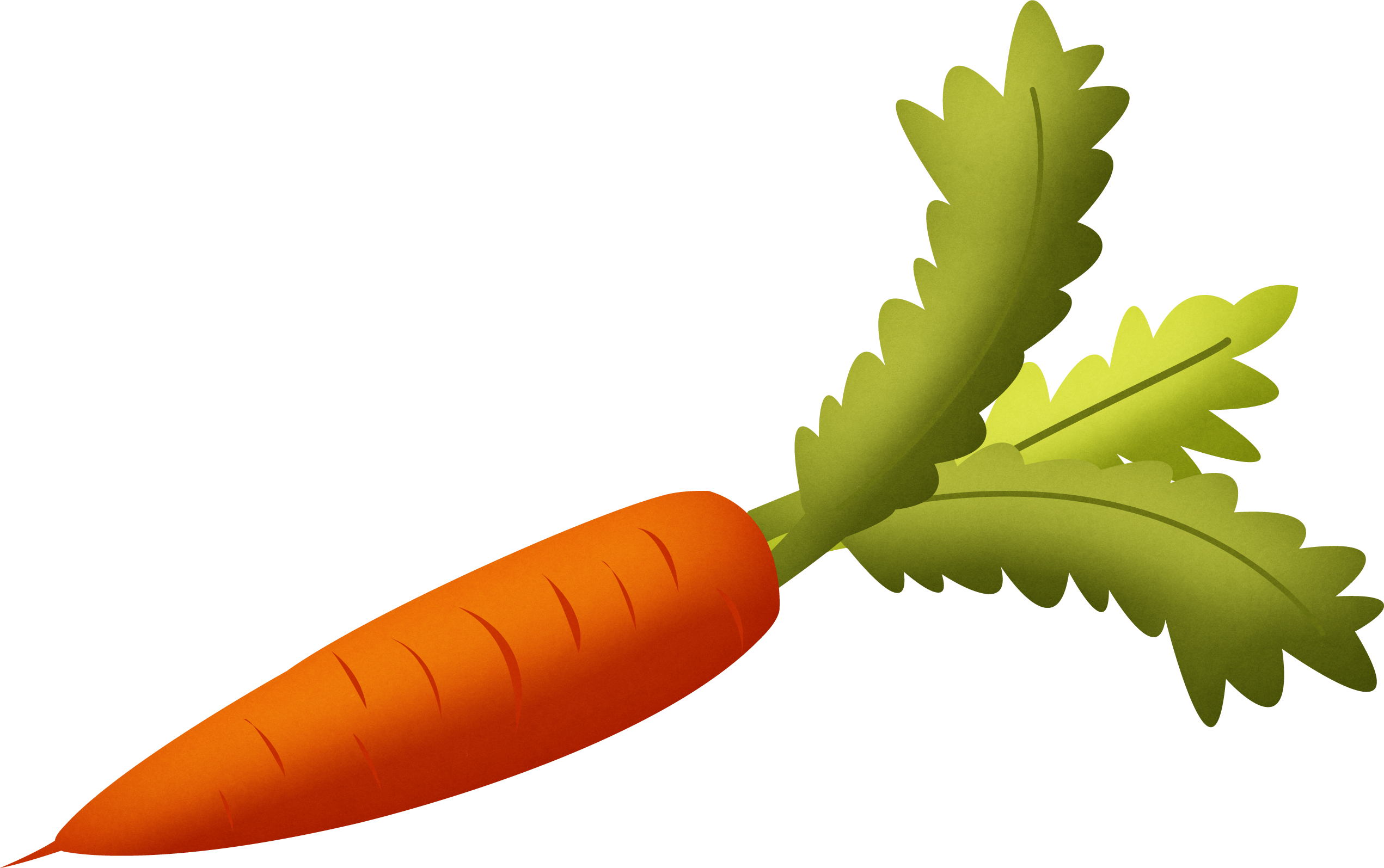 Carrot with green leaves clipart isolated stock photo by