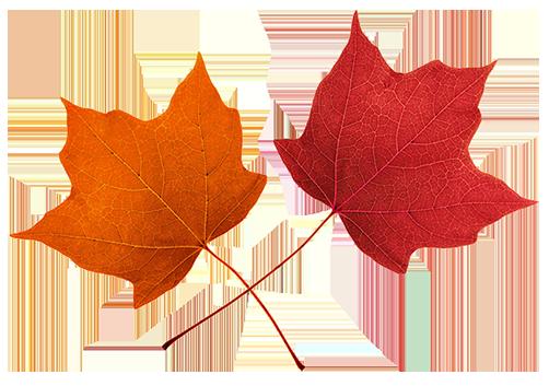Fall leaves clip art beautiful autumn clipart 2