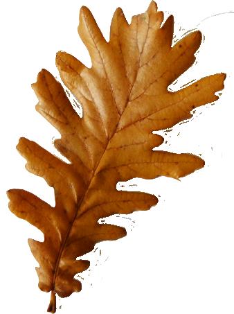 Fall leaves clip art beautiful autumn clipart  4