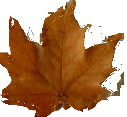 Fall leaves clip art beautiful autumn clipart  5