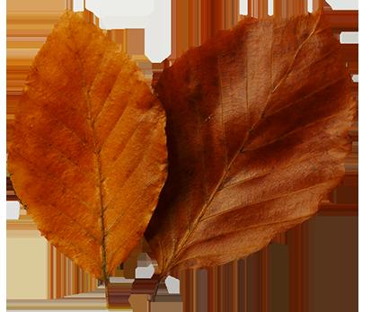 Fall leaves clip art beautiful autumn clipart  6