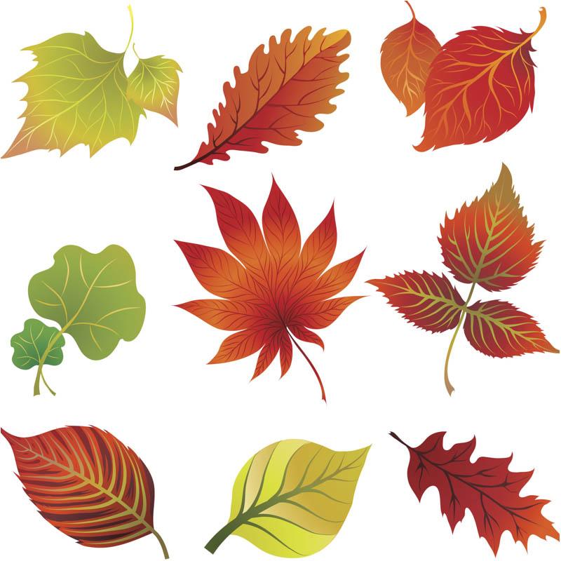 Leaves clip art clipart free clipart microsoft clipart microsoft