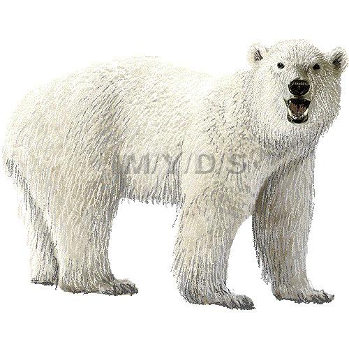 Polar bear clipart graphics free clip art