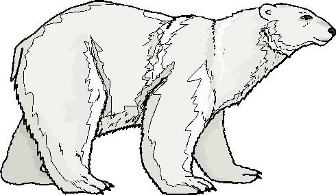 Polar bears clip art 3